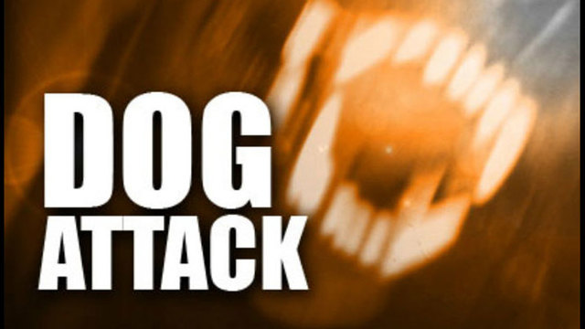 Two off-leash dogs kill a woman's dog in Campbell County