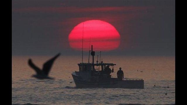 Fishermen face another quota cut, could hit lobster prices