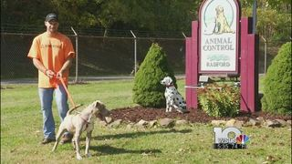 Rising river levels cause Radford Animal Shelter to evacuate Saturday afternoon