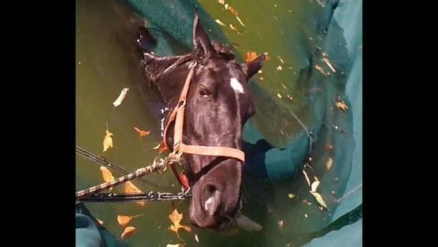 baby-horse-1_308809
