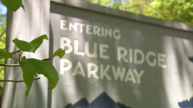 Motorcyclist dies after deer-involved crash on Blue Ridge Parkway