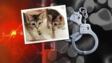 Reward offered after dozens of cats reportedly abandoned in Danville Monday