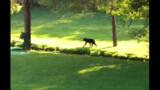 Bear surprises golfers at Brookside Par 3 Golf Course