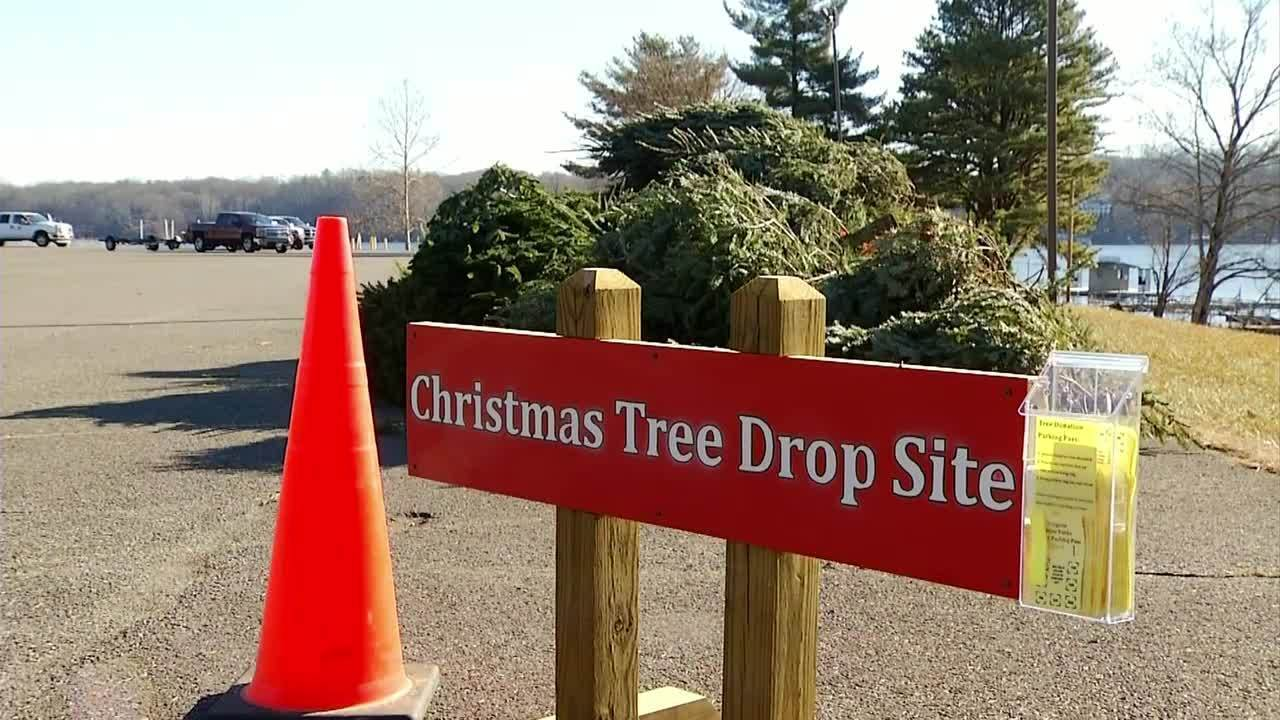 Claytor Lake Collecting Christmas Trees For Fish Habitat