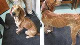 Donations needed for Rockbridge neglected dog