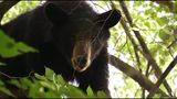 Grayson Highlands State Park closes trails due to bear activity