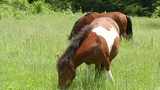 Grayson Highlands State Park is home to wild ponies