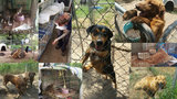Angels of Assisi helping rescue 42 dogs, 31 cats from S.C. home