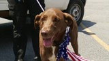 Fourth of July top day for lost pets&#x3b; here's what to do if they go missing