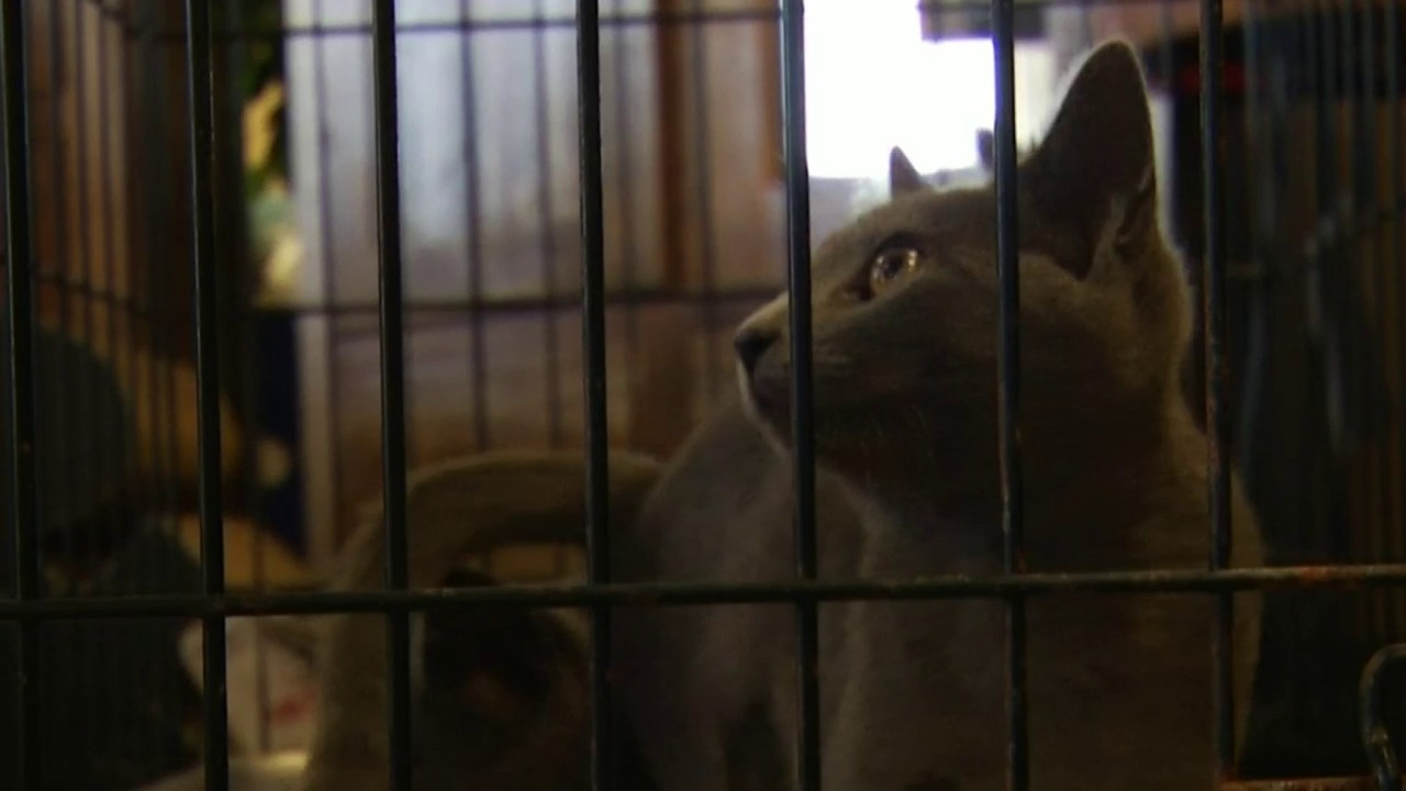 Clear The Shelters Event Held At Christiansburg Grand Home