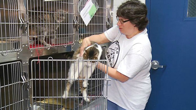 Roanoke shelter reaches capacity for cats, kittens