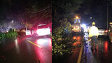 Downed tree causes 3-car crash, temporarily closes road in Martinsville