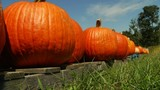 Pumpkins and apples in southwest Virginia nearly damaged from Florence's&hellip&#x3b;