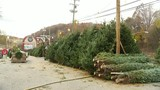 Farmers credit fall weather for exceptional Christmas tree crop