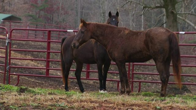 Owner Of Horses Found Atop Mill Mountain Located