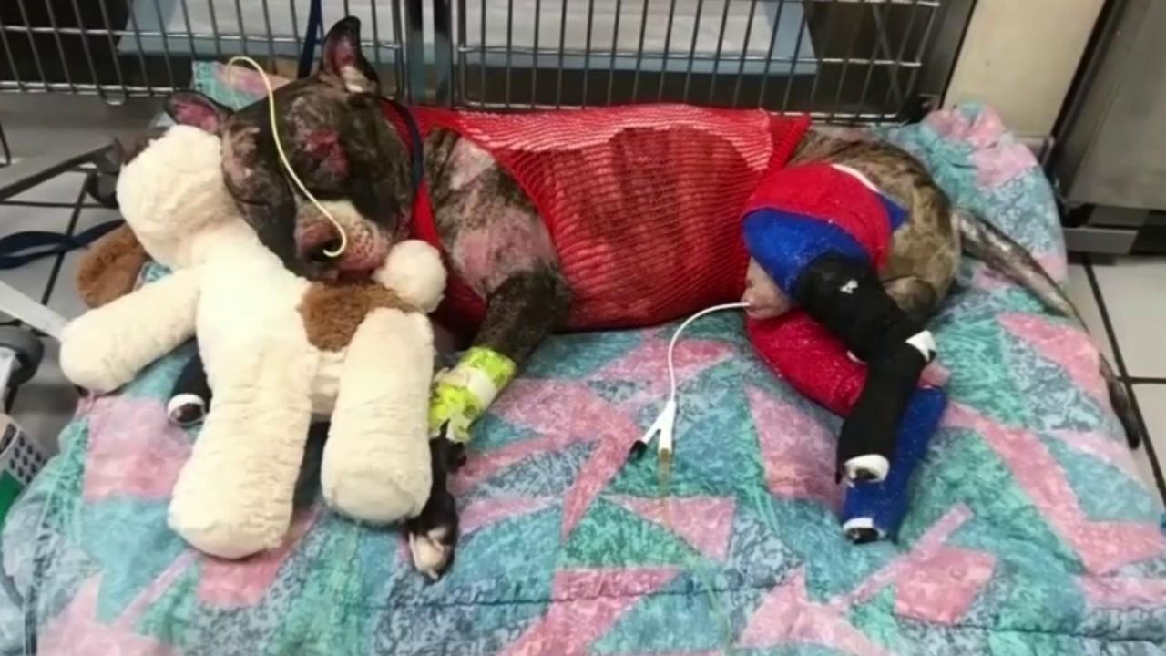 Dog tied to pole set on fire in richmond dies