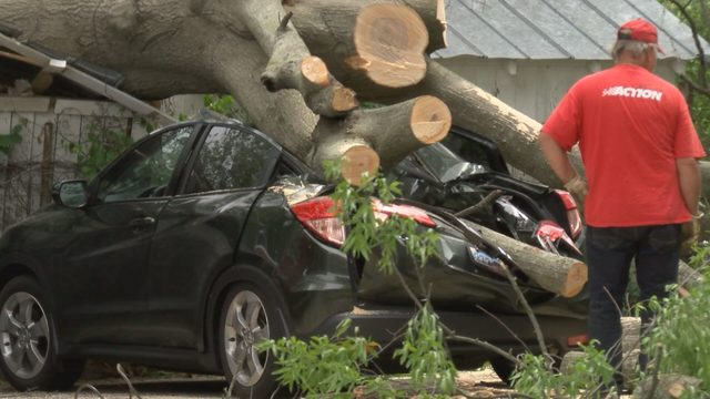 Car crushed in Danville when part of tree falls