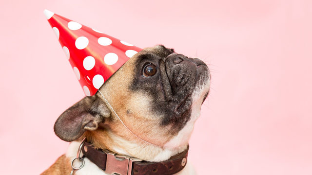 You can throw your dog a birthday party for a good cause