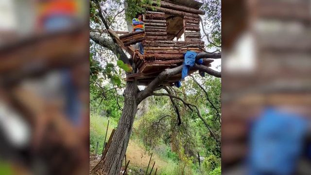 Burglary suspect found hiding out in California tree house