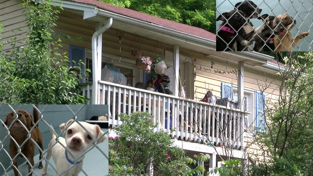 39 dogs seized from Southwest Virginia condemned home with no running&hellip&#x3b;