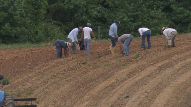 Hemp planting underway in Southside