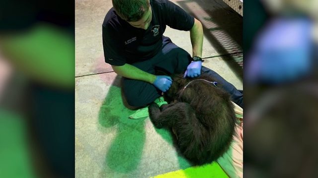 Georgia paramedics treat bear cub hit by car