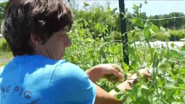 Roanoke Co + Op part of program that doubles SNAP benefits