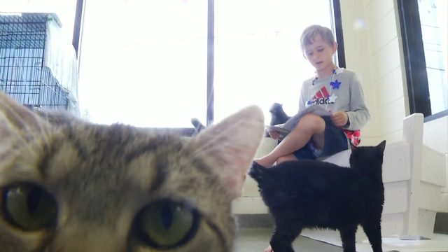 Kids celebrate the Fourth of July by reading to pets