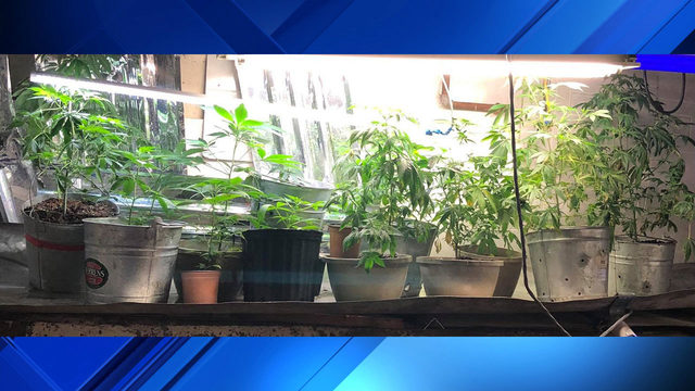 2 arrested, meth and 14 marijuana plants seized in Covington bust