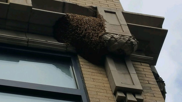 Hundreds of bees swarming downtown Roanoke building