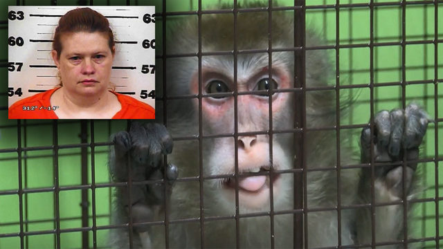 Dead dog, caged monkey found in Tennessee woman's bathtub
