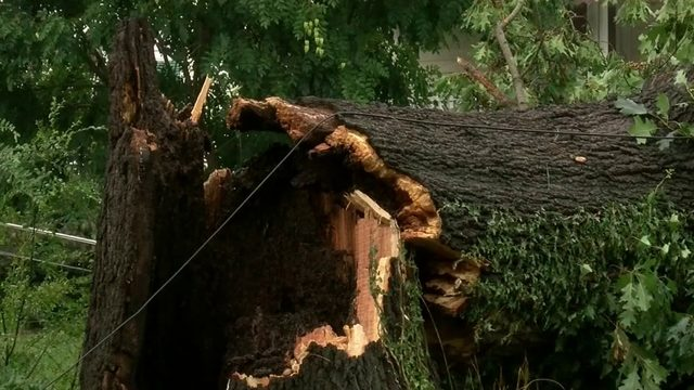 Weekend storm brings down trees, power lines in Lynchburg