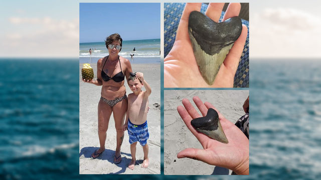 Bedford boy finds rare megalodon tooth at Myrtle Beach