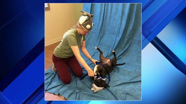Lynchburg animal shelter offering specials for Shark Week