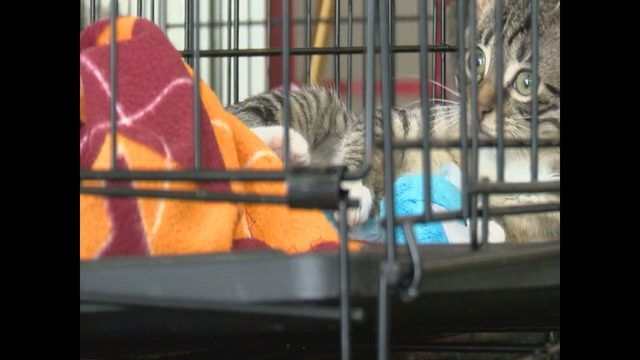 Local animal shelters prepare for nationwide pet adoption event