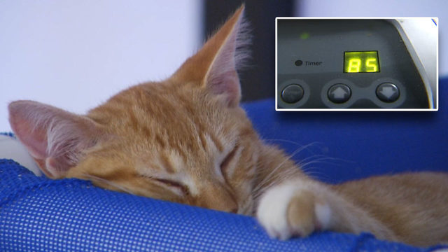 Workers, cats feeling the heat as Franklin County Humane Society loses A/C