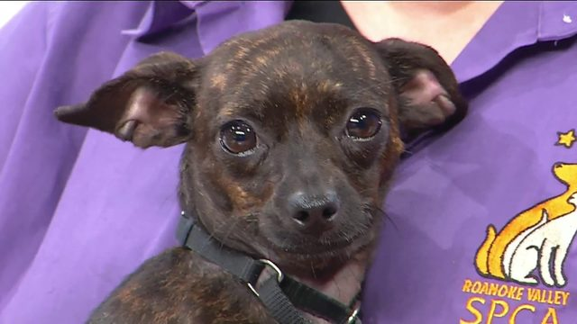 What to know about adopting during Clear the Shelters