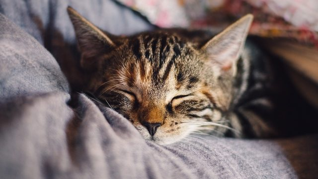 Finally -- there could soon be a vaccine for cat allergies