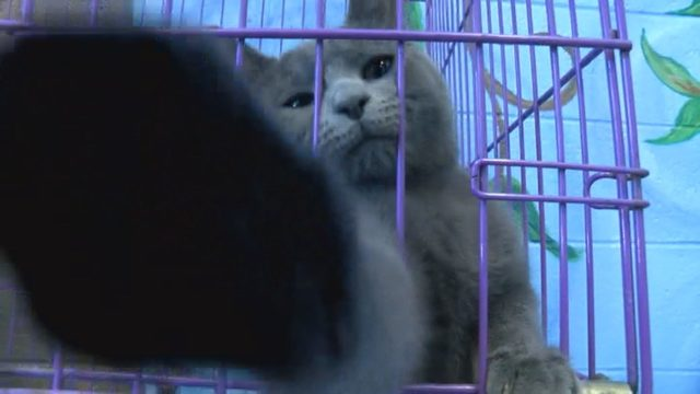 Dozens of pets find their forever homes during Clear the Shelters