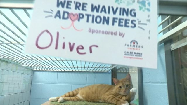 'Huge opportunity': Local shelters ready to help more pets after Clear…