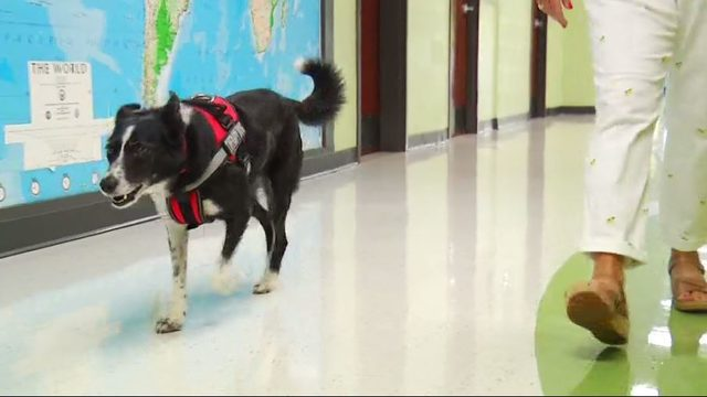 Dog is newest staff member at Mountain View Elementary