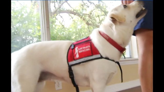 Life-changing grant awarded to local group that trains service dogs
