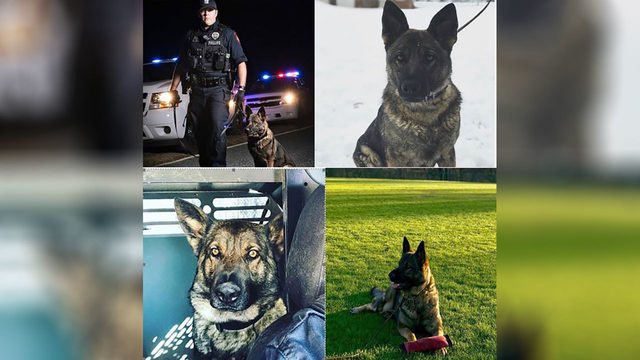 Danville K-9 will receive ballistic vest thanks to donation