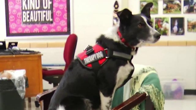 Mountain View Elementary's newest staff member is a dog