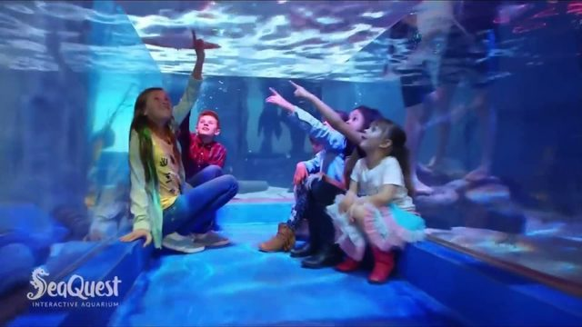 Behind the scenes at SeaQuest before its October opening in Lynchburg