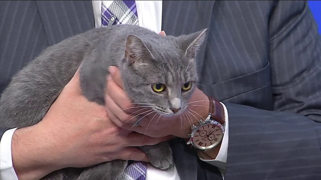"Roanoke SPCA introduces ""Emma"" as its adoptable Pet of The Week"