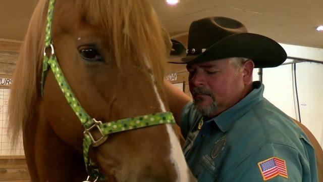 Horses helping veterans battle depression
