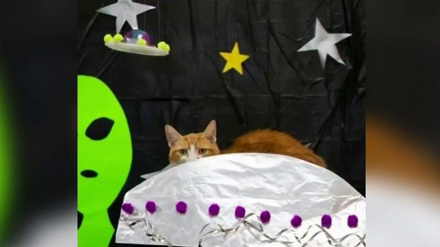 Nonprofit uses plan to storm Area 51 to encourage pet adoptions
