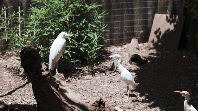 Wild Wednesday: Seasonal Aviary