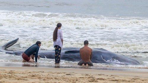 Aquarium: Beached whale on Maryland Coastline dies
